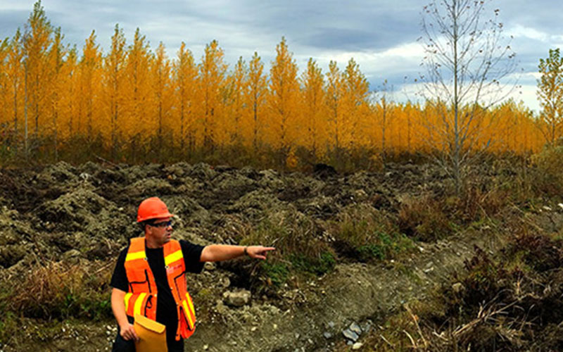 Recycling FRMs in forests on hybrid poplar plantations.