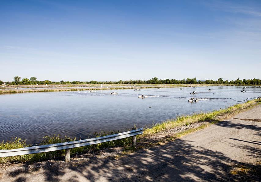 Dépendant des besoins ponctuels  de sa clientèle génératrice de MRF, Viridis recycle annuellement entre 30 000 et 75 000 tonnes de biosolides municipaux ou industriels provenant d'étangs aérés. Au Québec, plus de 600 municipalités traitent leurs eaux usées par l'entremise de cette technologie.