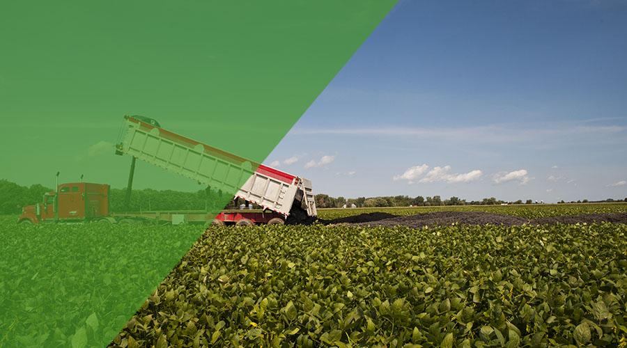Viridis, Produits fertilisants