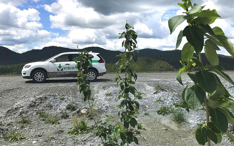 Projet de recherche pour l'afforestation des haldes minières d'amiante