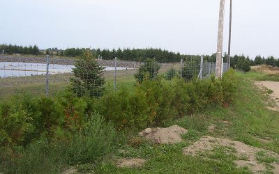 CMI's Green Fund contributes to the revegetation of a municipal site