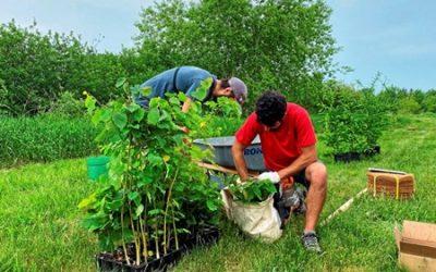 Viridis environnement, contributeur d'un projet de plantation d'arbres à Alma